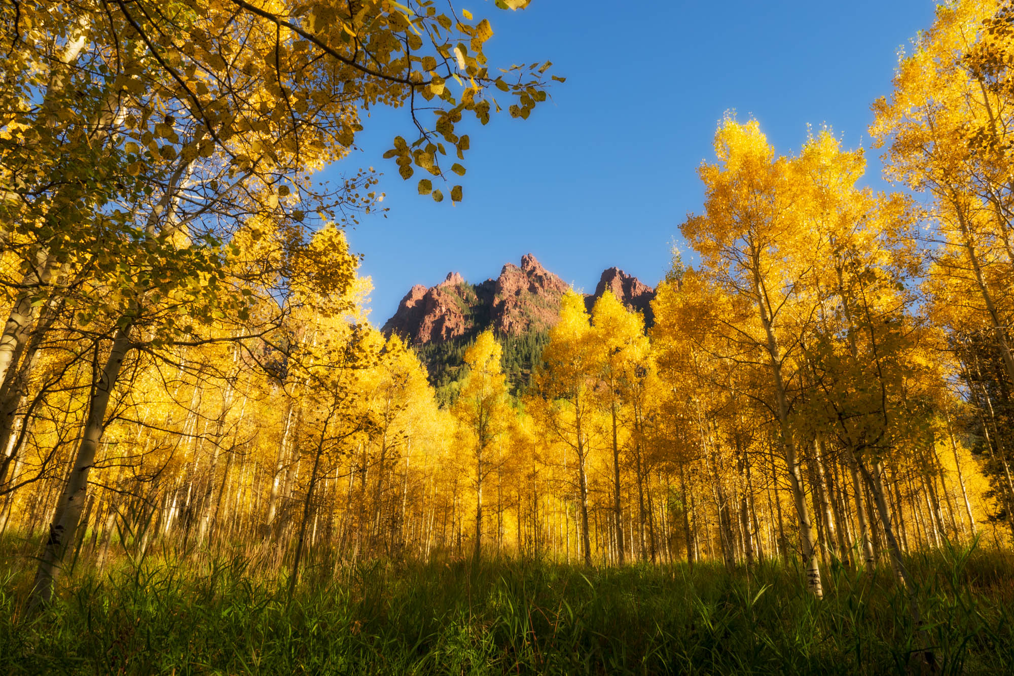 Aspen and Mountain